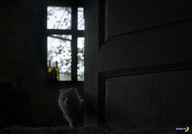 Звери захватили заброшенный домик в лесу