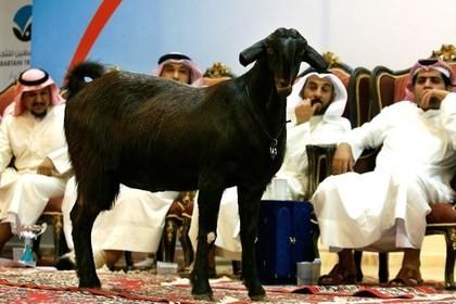 За козла заплатили $3,500,000