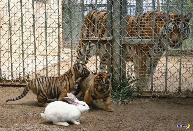 Кролики и хищники