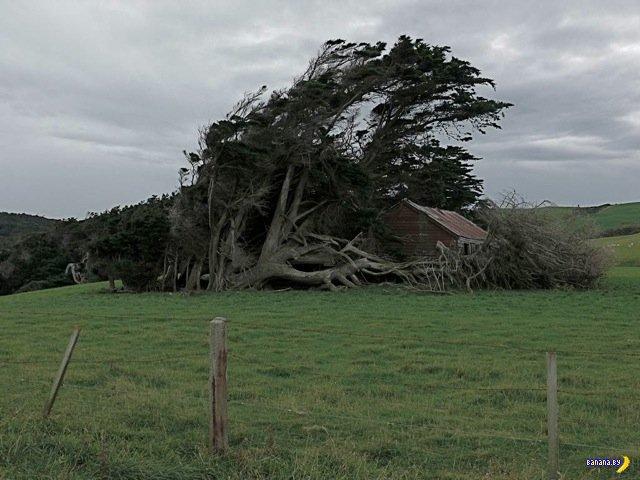 Ветер виноват!