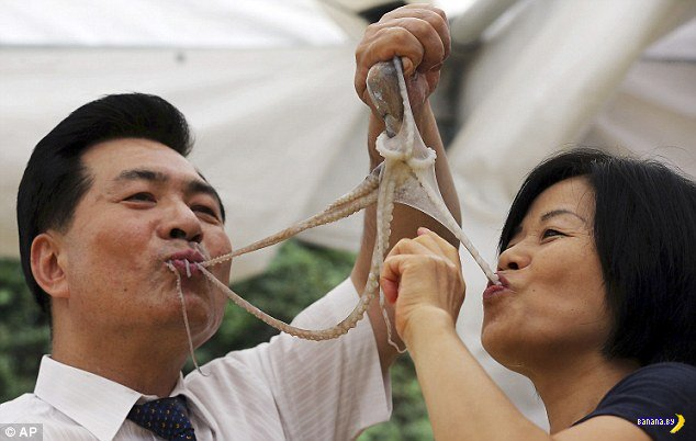 Закусили осьминогами