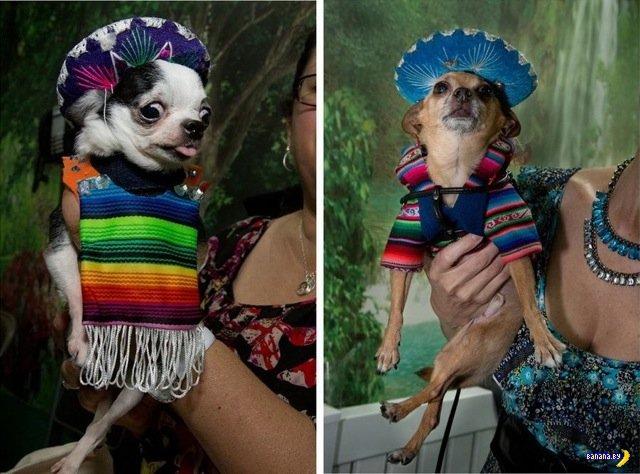 Собаке - собачья мода!