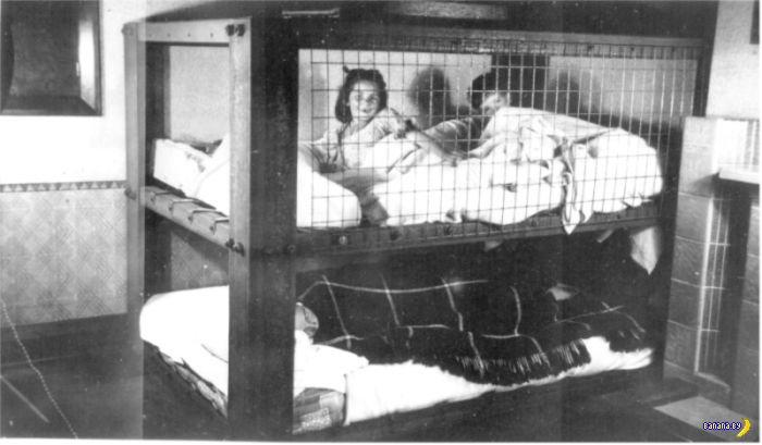 Клетка Моррисона