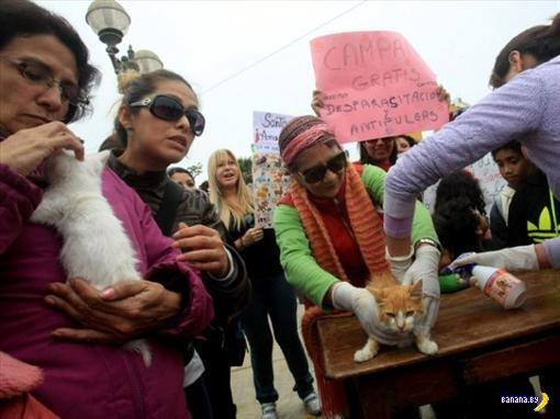 В Перу очень любят кошек
