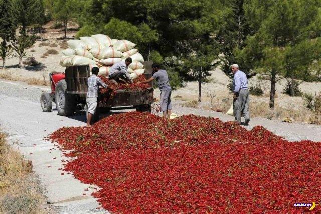 Красное шоссе в Турции