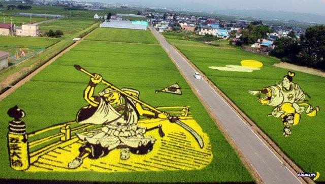 Картины из риса на японских полях