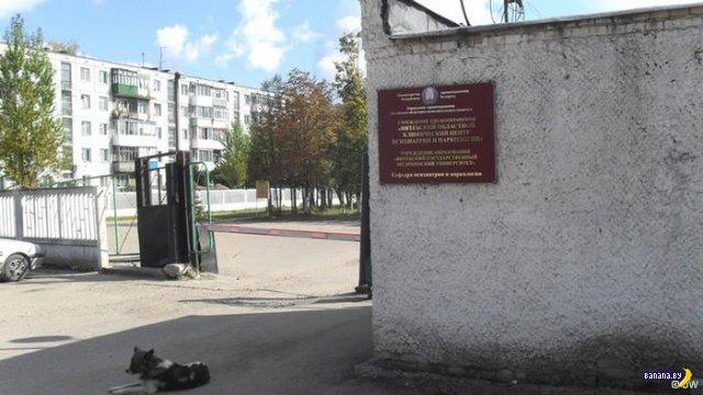 За что витебского врача-правдоруба закрыли в психбольнице?