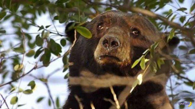 Потерявший очки турист случайно побил медведя
