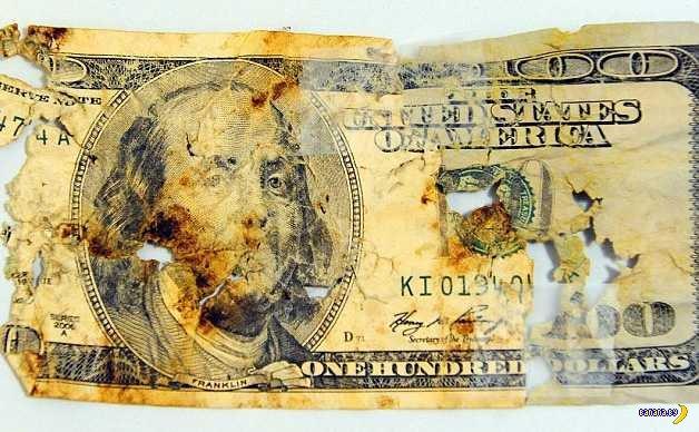 Американец собрал 500$ из собачьих экскрементов