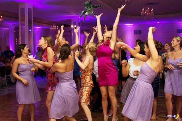 Невесты кидают котов