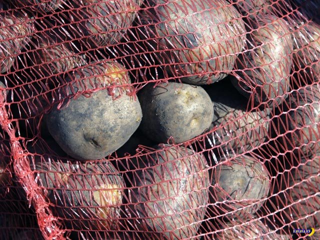 В России цена на картофель взлетела на рекордную высоту