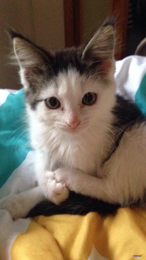 История кота по кличке Бандит