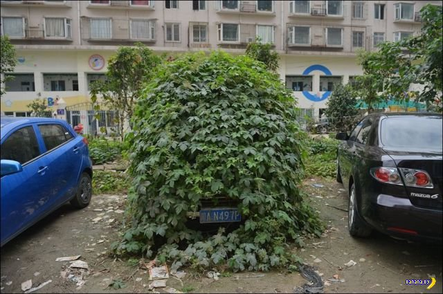 Брошенная машина превратилась в куст