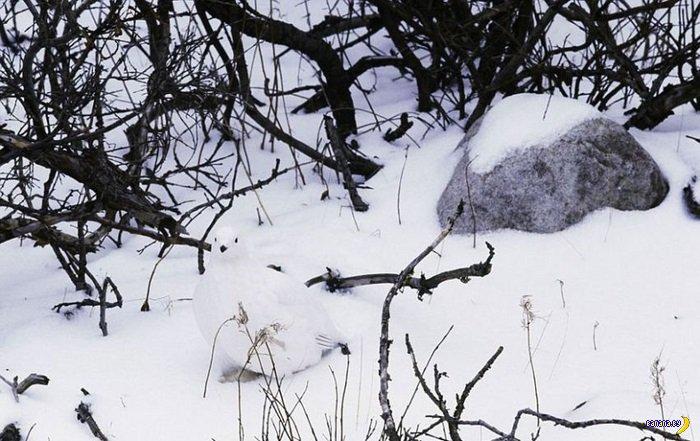 Чудеса маскировки в дикой природе