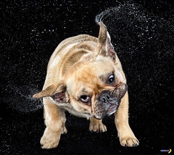Собаки-кривляки