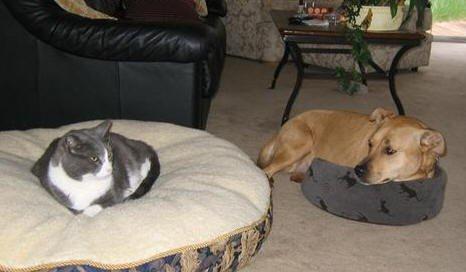 Кто главнее, коты или собаки?
