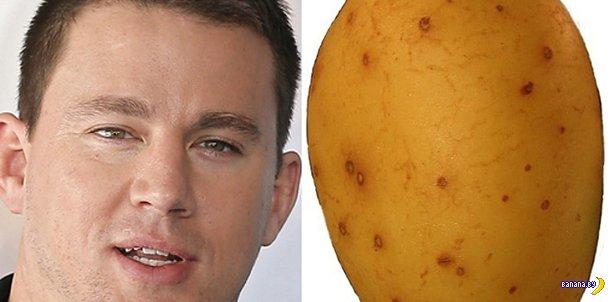 13 картофелин, похожих на Ченнинга Тейтума