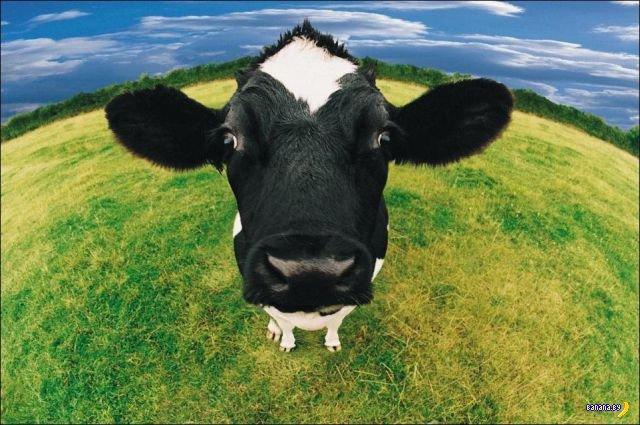 Животный мир - 150