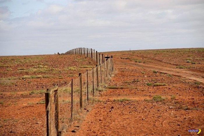 Великий австралийский забор
