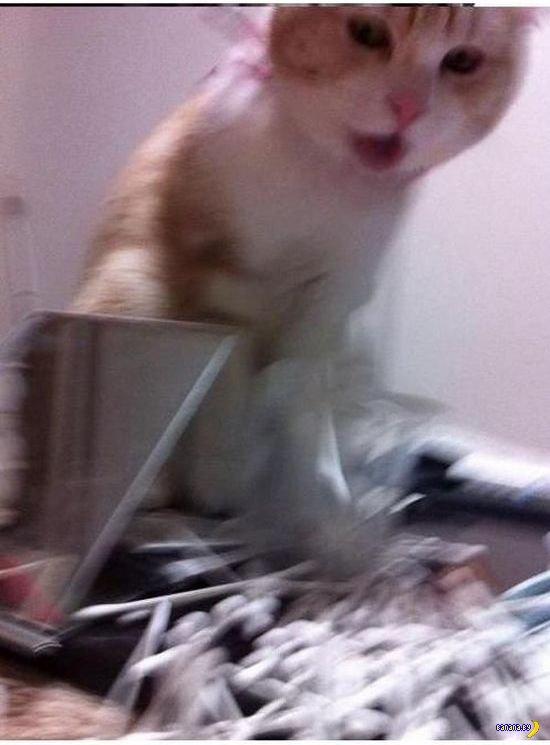 Ярость кота