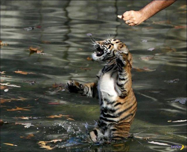 Животный мир - 159