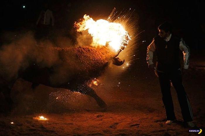 Огненный бык
