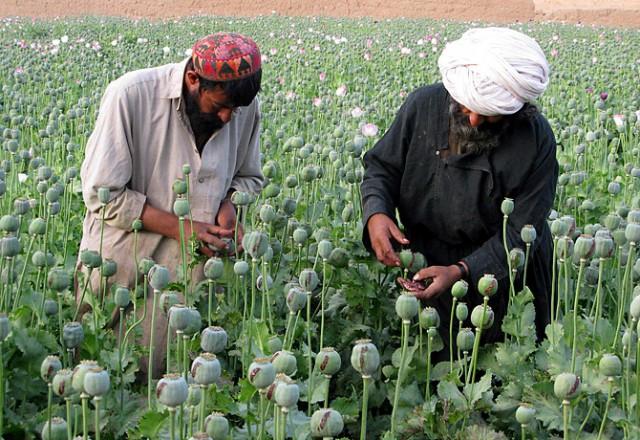 Афганистан может праздновать свои Дажынки!