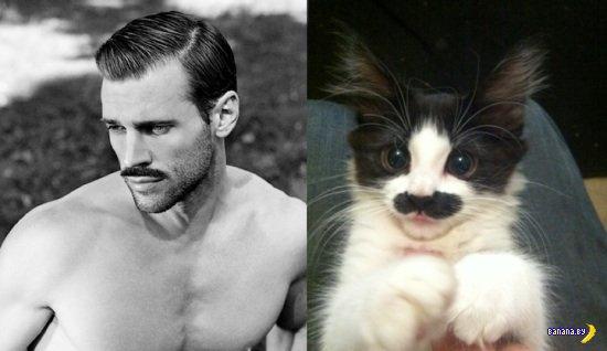 Коты, которые копируют моделей-мужчин