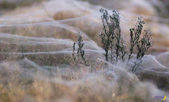 А вы боитесь пауков?