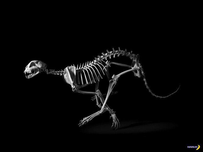 Фотограф Патрик Грие и Эволюция