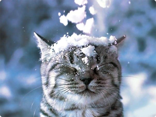 Первый снег - опрос