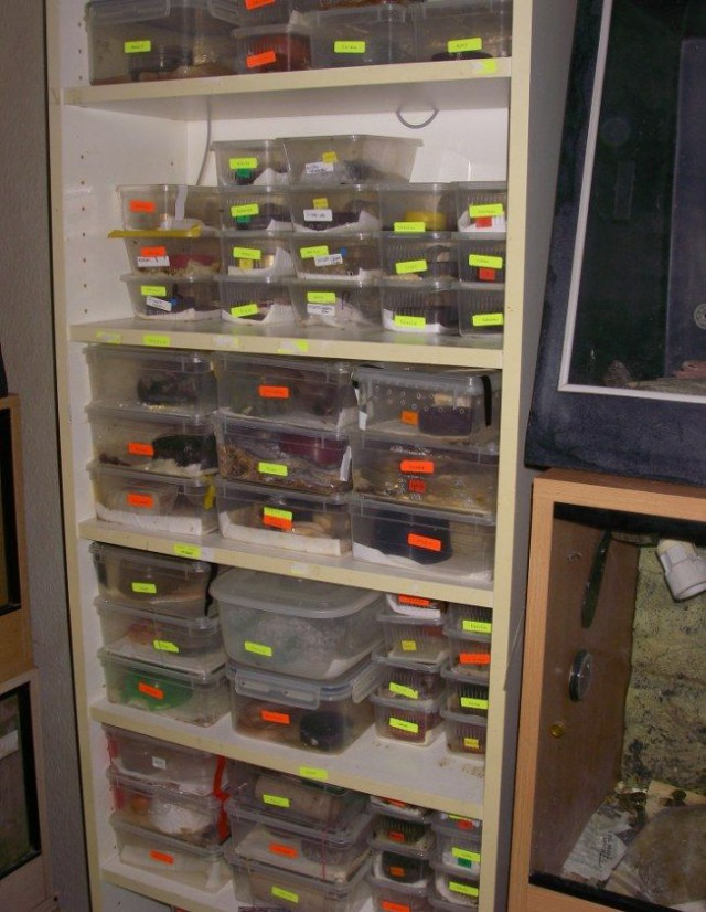 140 змей в двухкомнатной квартире