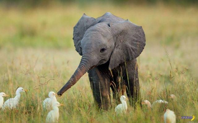 Животный мир - 180