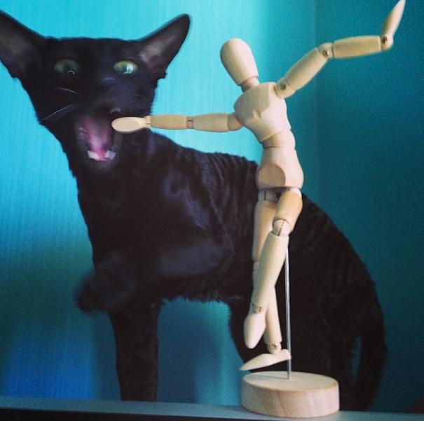 Почему кошки так импульсивны и порой странно себя ведут?