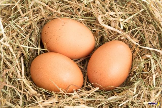 Почему яйца имеют яйцеобразную форму?