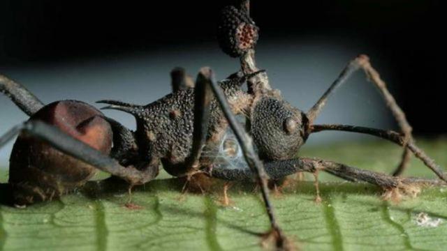 Самые жуткие паразиты