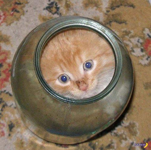 Кошки это жидкость