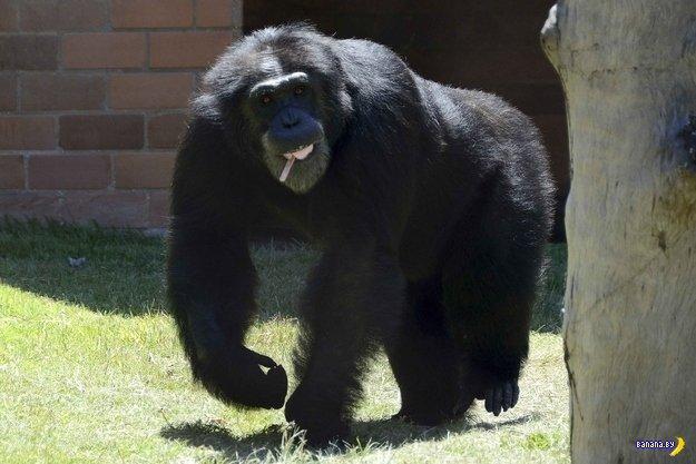 А тем временем в зоопарках Рио