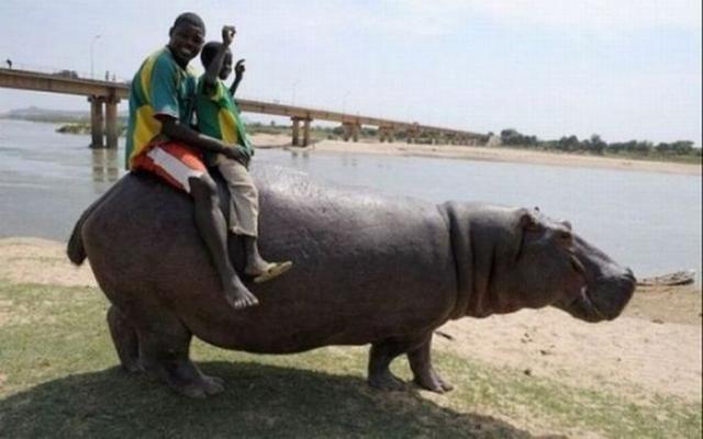 А тем временем в Африке - 1