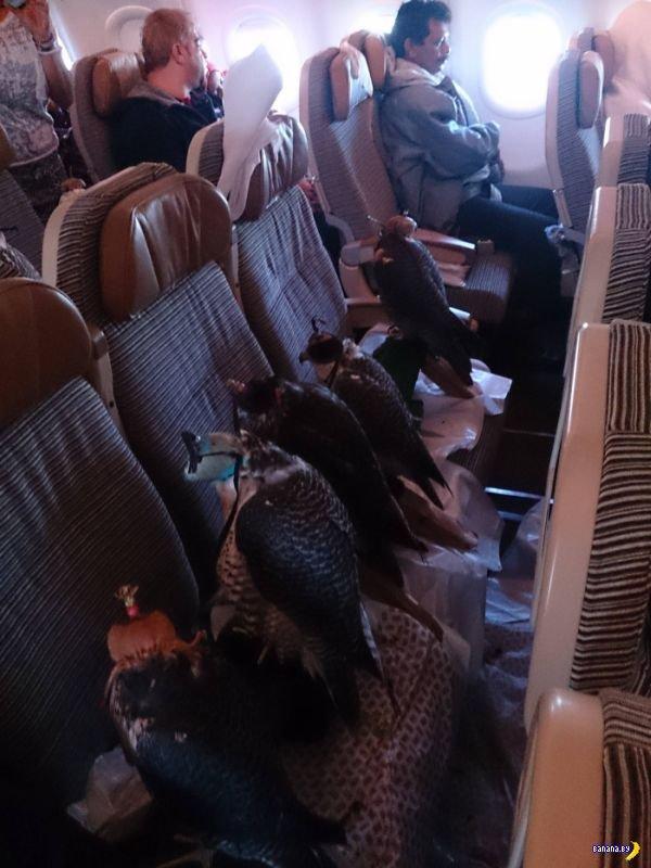 Интересные пассажиры