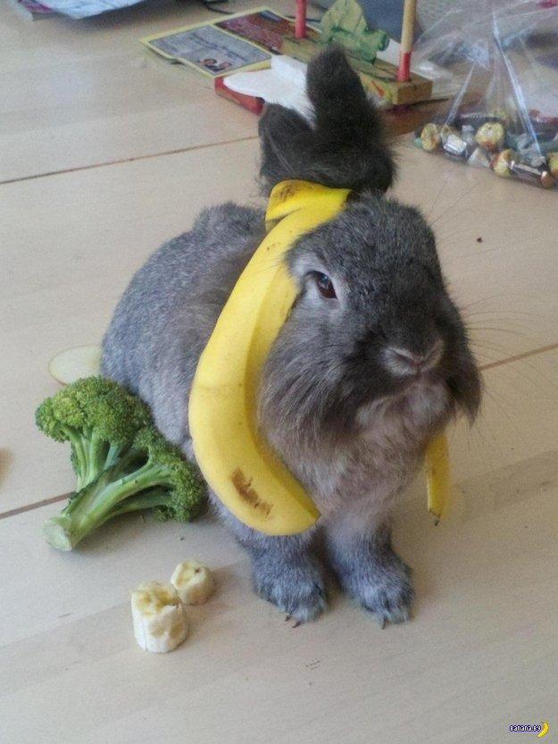 Приложите банан для масштаба