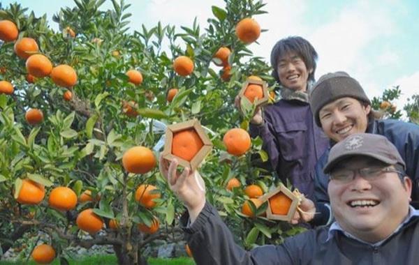 Японские фермеры не дремлют!