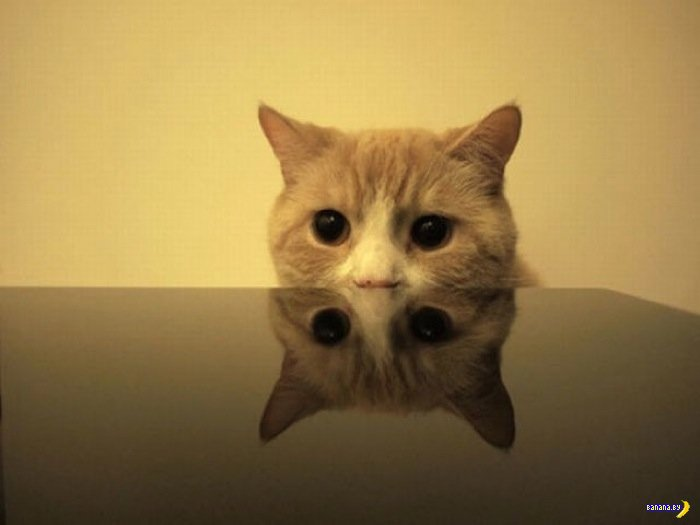 Животный мир - 199 - Коты-ниндзя!