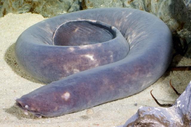 Необычные подводные животные