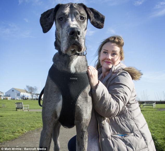 Очень большой пёс