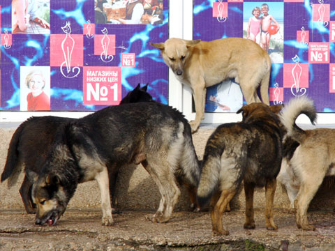 Люди против собак