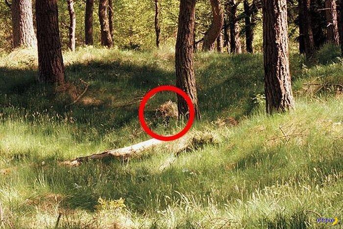 Найди снайпера!