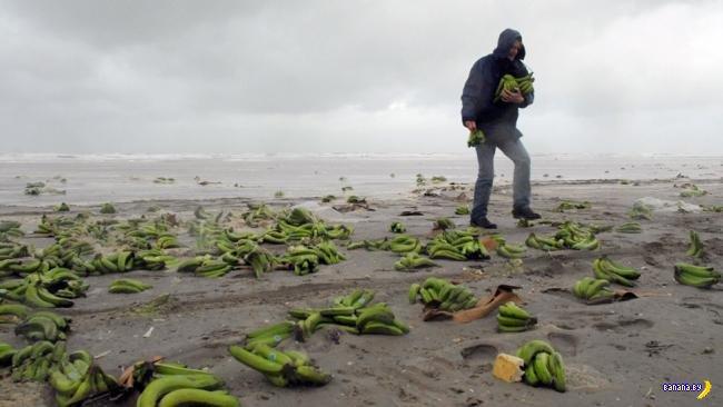 Бананы и оторванные ступни в кроссовках