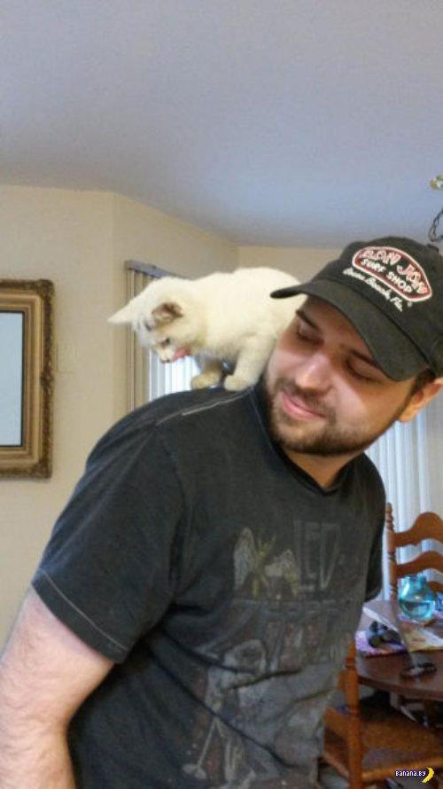 Главный день в жизни одной кошки