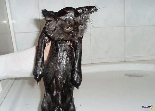Помыть киску